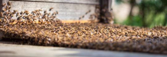 Das Bild zeigt ein Bienenvolk als Sinnbild für den Value-Stream