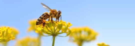 Das Bild zeigt eine Biene beim Bestäuben einer Blüte als Sinnbild für einen Prozess